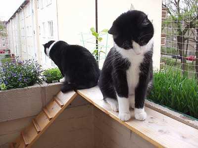 wie habt ihr euren balkon gestaltet? - seite 2 - katzen forum, Gartenarbeit ideen