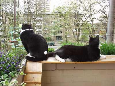Brustungshohe Balkon Katzen Sitzplatz Balkon